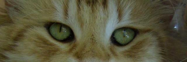Occhi-Snorre