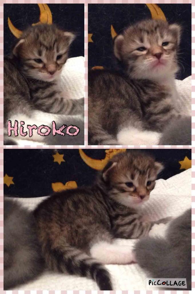 Hiroko-2w