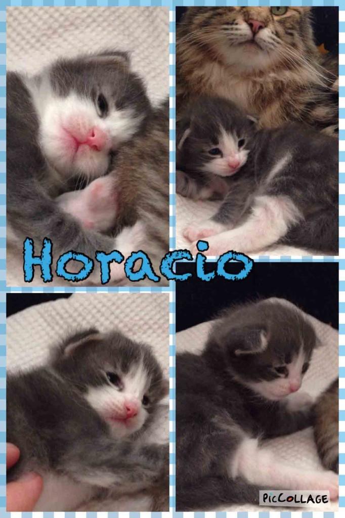 Horacio-2w